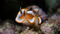 Nudibranch by Thomas Marti on 500px