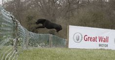 Gundog Competition in the UK is World's Biggest