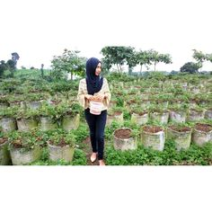 Strawberry garden at ketep pass