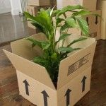 Tips on moving sequence 3 Moving your plants