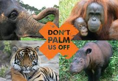 SAY NO TO PALM OIL!  The industry is linked to major issues such as deforestation, habitat degradation, climate change, animal cruelty and indigenous rights abuses in the countries where it is produced, as the land and forests must be cleared for the development of the oil palm plantations.  SEE PALM-OIL FREE BRANDS HERE: http://www.selvabeat.com/palm-oil-free-brands