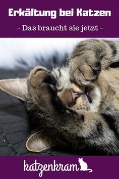 Even can # be cold. How do you recognize that and a # cold . - Gesundheit und Krankheiten bei Katzen - Even can # be cold. How do you recognize that and a # cold . Food Dog, Cat Food, F2 Savannah Cat, Cat Supplies, Cat Health, Health Care, Cat Lady, Mammals, Animals And Pets