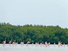 Rio Lagartos The Yucatan Peninsula