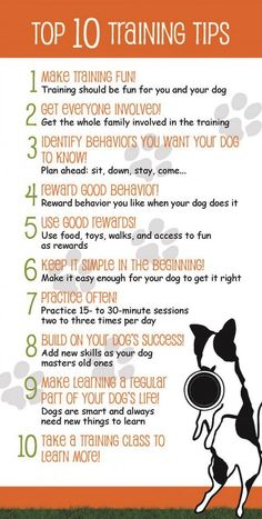 A dog can be taught to do a lot of tricks, however there are a few dressage tips that you must be familiar with before you learn how to teach a dog to shake hands or its body on command. The most basic training tips and tricks are meant to ...