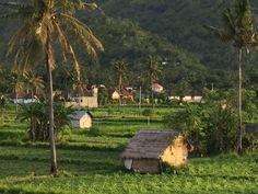 Field behind our house in #Amed #Bali picture from our guest Pippa Howard