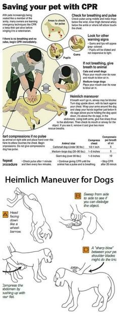 Know how to save your dogs life with these CPR and Heimlich Practices and Tips &. razas Know how to save your dogs life with these CPR and Heimlich Practices and Tips &. Heimlich Maneuver For Dogs, Dog Heimlich, Fu Dog, Education Canine, Owning A Cat, Dog Care Tips, Pet Tips, Old Dogs, Dog Training Tips