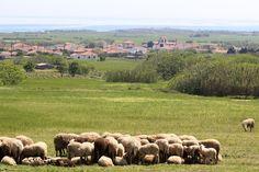 στο  χωριό  Παναγιά  –  Λήμνου