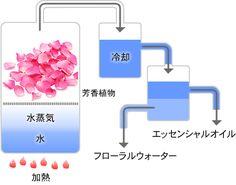 aroma_img02.jpg (450×354)
