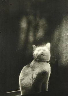 Please open the door (Cat in Window) by Shikanosuke Yagaki, c. 1930s