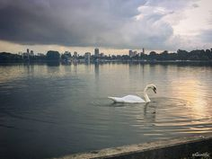 The skyline of Rotterdam from the Kralingseplas last night.. (shot with my phone…