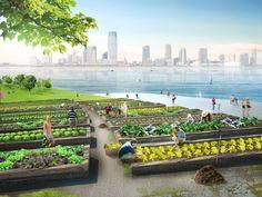 urban green loop gardening #3 | multi-purpose compost islands | new york city | design: present architecture