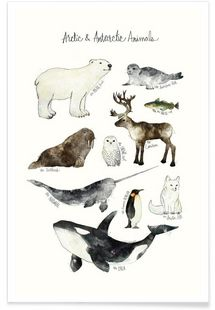 Arctic and Antarctic Animals - Amy Hamilton - Premium Poster