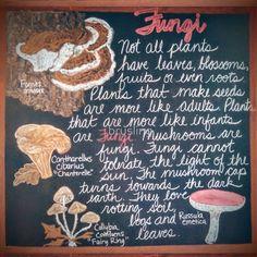 'Botany Lesson - Fungi' Scarf by brusling Blackboard Drawing, Chalkboard Drawings, Chalk Drawings, Chalkboard Ideas, Waldorf Math, Holistic Education, American High School, Waldorf Education, Home Learning