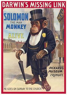 Solomon the Man Monkey poster  'Darwin's Missing Link'  1908   Pepe is SO jealous of Solomon's hat and umbrella