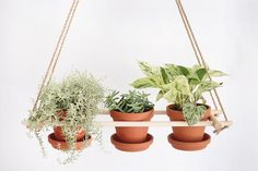 This planter fits into any home and is still effortlessly stylish. You can't go wrong with this one.