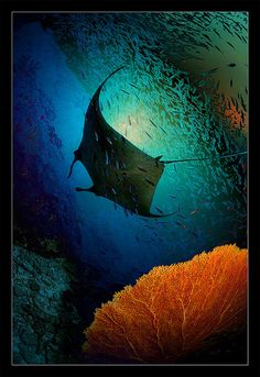 Manta dreams by Andrey Narchuk, via Flickr