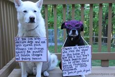 Tip #307  www.peaceandpaws.org Paws Rescue, White Shepherd, Tip Of The Day, Creature Comforts, Love And Respect, Twinkle Twinkle, Bullying, Labrador Retriever, Random Stuff