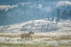 Art prints for sale: horses on a frosty mountain in Montana