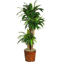 "Nearly Natural 6584-0508 62"" Dracena w/Basket Silk Plant (Real Touch) - NN_6584-0508"