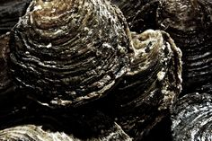 One of the most delicate and exquisite foods from Denmark and a prominent feature of the rejuvenated Nordic cuisine – oysters from Limfjorden