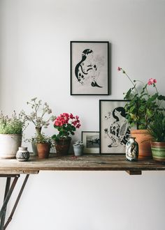 Nature inspired art prints.... and you can never have enough plants.