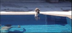 Cat Fails - Click On The  Image To Watch The Funny Gif