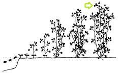La ferme de Vanessa: Des nouvelles de la luzerne implantée au printemps... Agriculture Biologique, Home Decor, Art, Farm Gate, Baby Newborn, Spring, Art Background, Kunst, Interior Design