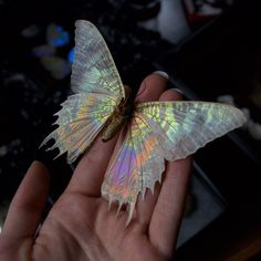 thebutterflybabe By removing the scales from this Sunset Moth I have revealed the underlying membrane of its wing where the beautiful iridescent coloring can still be see. Beautiful Creatures, Animals Beautiful, Cute Animals, Magical Creatures, Butterfly Kisses, Butterfly Art, Rainbow Butterfly, Beautiful Bugs, Beautiful Butterflies
