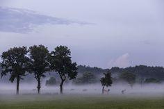 風景, 自然, 空, 残り, 牧草地, 放牧する, 木, 霧, ペット