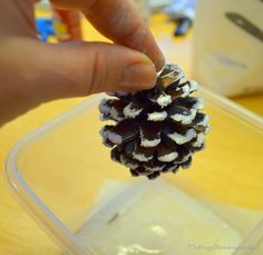 Pinecones. Paint tips white then sprinkle with epsom salt.  Let dry.  Snowy sparkly pinecones to go on your tree or any of your Christmas decorations...