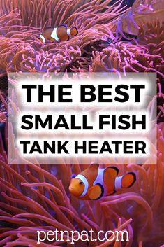 The Best Small Fish Tank Heater – Small Aquarium Heaters Betta Fish Tank, Aquarium Fish Tank, Aquarium Stand, Aquarium Design, Aquarium Ideas, Fish Tank Themes, Fish Tank Stand, Small Fish Tanks, Aquarium Heater