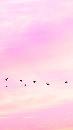 Matt Crump photography iPhone wallpaper Pastel sunset geese Simple Iphone Wallpaper, Phone Screen Wallpaper, Flower Phone Wallpaper, Summer Wallpaper, Pastel Wallpaper, Wallpaper S, Wallpaper Backgrounds, Cute Backgrounds, Cute Wallpapers