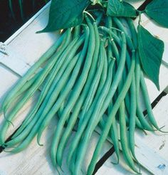 Pole Bean Fortex, Phaseolus vulgaris 50 Open Pollinated Seeds by David's Garden Seeds by David's Garden Seeds, http://www.amazon.com/dp/B00DPLTCXC/ref=cm_sw_r_pi_dp_fGYzsb1FQF0HH