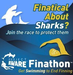 The race is on. How many people can you Get Swimming to End Shark Finning? Join in an upcoming Finathon™ challenge near you or grab tools and resources to organize an event in your community: http://www.projectaware.org/finathon #Fundraising