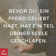 Besuche www.emma-pferdefuttershop.de
