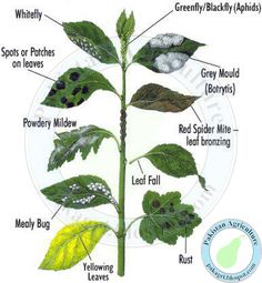 Here's a handy guide to recognizing diseases on plant leaves.