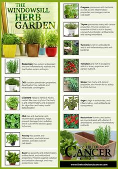 7 Infographics That'll Teach You Everything About Growing An Indoor Herb Garden | Balcony Garden Web
