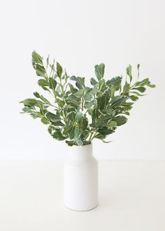 Get the look of lush leaves, without the fuss! High-quality artificial eucalyptus stems are the trendiest way to add freshness and light into your home decor, no matter your style. Plop a few stems of fake eucalyptus into your favorite vase and enjoy the views. Shop artificial eucalyptus and other faux greenery for your home decor at Afloral.com. All You Need Is, Nandina Plant, Faux Olive Tree, Eucalyptus Garland, Greenery Garland, Magnolia Leaves, Vase Arrangements, Flower Branch, Real Plants