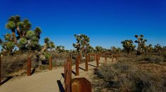 For those times you don't want to make the drive all the way out to Joshua Tree, but still want to take in the beauty of the desert.