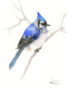 Blue Jay Art, 12 x 9 in, one of a kind original watercolor painting blue jay art, bird art blue bird, birds of usa bird lover gift by ORIGINALONLY on Etsy