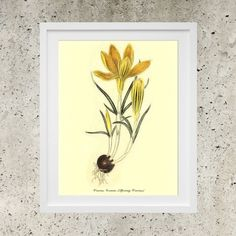 SALE Poster Download   Botanic Garden Yellow by DigitalBanana Spring Crocus