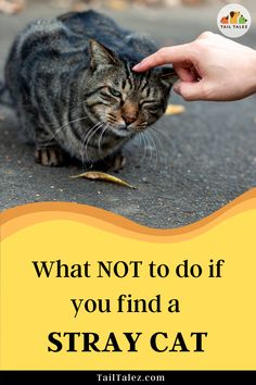 Most people take the wrong approach. Here's the right way to do it– confirmed by cat experts. Ikea Cat, Cat Behavior Problems, First Time Cat Owner, Indoor Cats, Cat Health, Litter Box, Life Humor, Funny, Tips