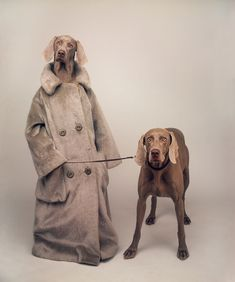 """""""William Wegman was born in 1943 in Massachusetts.It was while he was in Long Beach that Wegman got his dog, Man Ray, with whom he began a long and fruitful collaboration."""""""