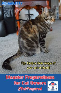 1000 images about cat health on pinterest for cats kidney disease and raw. Black Bedroom Furniture Sets. Home Design Ideas