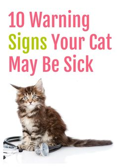 Cat Care Kittens These 10 Warning Signs Your Cat May Be Sick are a must-read for any pet owner! - These 10 Warning Signs Your Cat May Be Sick are important to helping you determine if your cat is sick. Remember vet attention is a must! Sick Kitten, Sick Cat, Kitten Care, Cute Kittens, Little Kittens, Siamese Kittens, Cat Symptoms, Cat Presents, Cat Care Tips