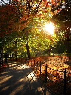 Autumn Central Park New York City  ... Played frisbee so many times here... <3