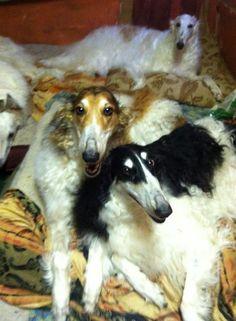 Mama Inari and friends