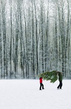 Bringing Home The Tree.
