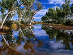 Creek Lined with River Red Gum Near Hermannsaburg, Northern Territory, Australia Photographic Print by Ross Barnett at AllPosters.com