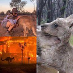 Thing 1, Kangaroo, Lamb, Tropical, Australia, Baby Bjorn, Baby Sheep